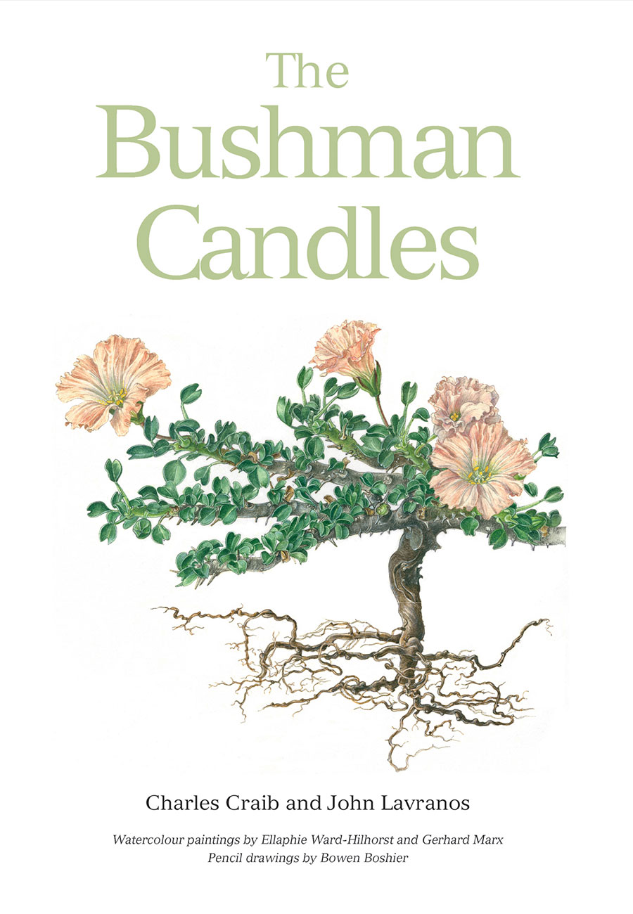 The Bushman Candles